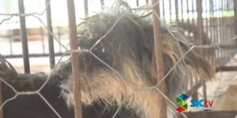 Grupo de voluntários criam associação de proteção aos animais, em Rolim de Moura
