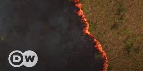 Como o desmatamento e queimadas ameaçam a Floresta Amazônica