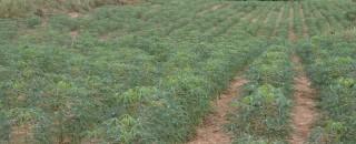 Rondônia alcança 43% da meta do Cadastro Ambiental Rural a menos de seis meses do prazo...