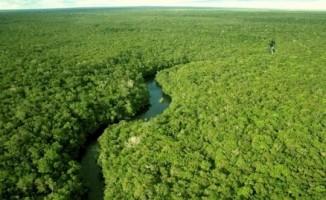 Floresta regenerada absorve 11 vezes mais carbono que mata virgem na Amazônia