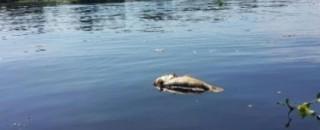 Mortandade de peixes no rio Guaporé assusta pescadores e mobiliza autoridades