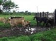 Salas temáticas da carne, leite e café serão inovação na 5ª Rondônia Rural Show