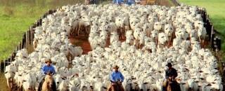 Faperon remarca nova reunião com indústrias de carne no dia 29