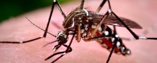 Terceiro caso de vírus da Zika em gestante é confirmado em Rolim de Moura