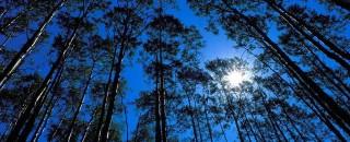 Portaria do Calendário Florestal de Rondônia entra em vigor nesta sexta-feira