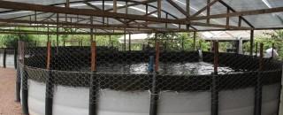 Projeto de piscicultura consorciada deve impulsionar a produção de peixe em Rondônia