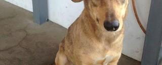 Funcionários de posto de SP procuram por donos de cadela perdida; Eles seriam de Rondônia
