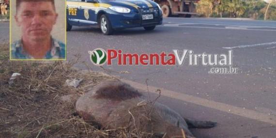 Pimenta Bueno: Morador de Rolim de Moura perde a vida após bater em capivara