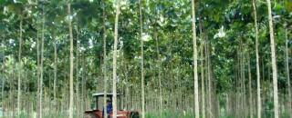 Rondônia adota procedimento mais seguro para autorização de exploração florestal
