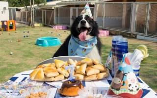 Cachorro ganha festa de aniversário e arrecada 205 kg de ração em Porto Velho
