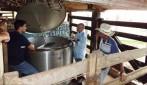 Produção leiteira é incentivada com encadeamento produtivo em Rolim de Moura