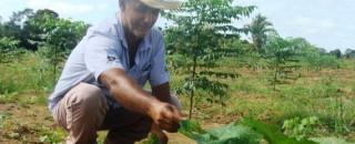 Opção de plantio de floresta na agricultura familiar será demonstrado durante a Rondônia Rural Show em...