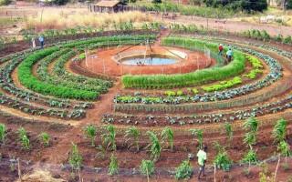 Projeto piloto do sistema integrado alternativo para produção de alimentos é uma das novidades da 6ª Rondônia Rural Show