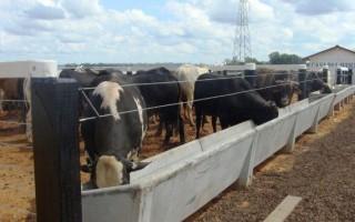Técnica de confinamento bovino garante produtividade em espaço reduzido; mostra ocorre na Rondônia Rural Show