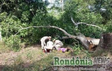 Trabalhador tem pé esmagado por árvore na zona rural de Rolim de Moura