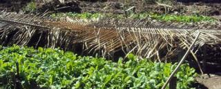 Médios produtores rurais serão assistidos pela Emater-RO em projeto experimental