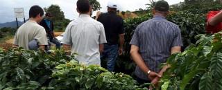 Produtor rural de Rondônia apresenta safra de café surpreendente