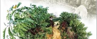 Publicação apresenta avanços e desafios para a cafeicultura de Rondônia