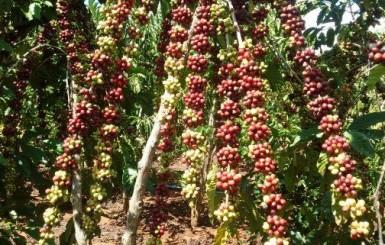 Rondônia mostra na Bolívia experiências tecnológicas bem sucedidas para fortalecimento do setor agropecuário