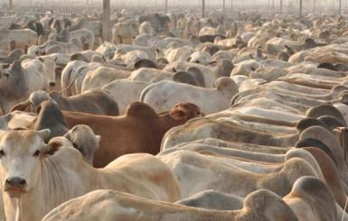 Confinamento de bovinos deve crescer 8% em dois anos