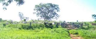 RO tem mais de 100 mil imóveis registrados no Cadastro Ambiental Rural; prazo segue até maio