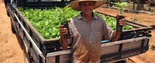 Distribuição de mudas incentiva produtores a investir na lavoura de café clonal na Zona da Mata
