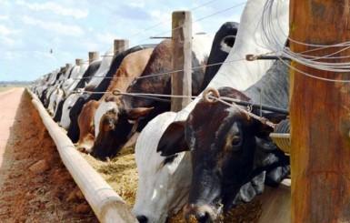 Nova modalidade de turismo nas propriedades rurais em Rondônia