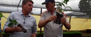 Viveiro de Nova Brasilândia cultiva mudas de café clonal em embalagens biodegradáveis