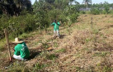 MFM soluções ambientais amplia programa de recuperação de nascentes em área do aterro sanitário de Cacoal