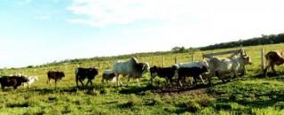 Rondônia já emite mais de 200 Guia de Transporte Animal online por mês