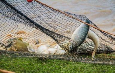 Rondônia mantém-se no ranking da produção de peixe e com licenciamento rápido e sem burocracia dos empreendimentos