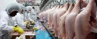 União Europeia proíbe 20 frigoríficos brasileiros de exportar frango para a região