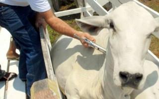Vacinação contra febre aftosa inicia neste domingo em Rondônia