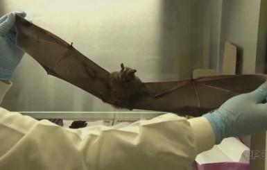 Morcego com vírus da raiva é encontrado em área central de Cacoal