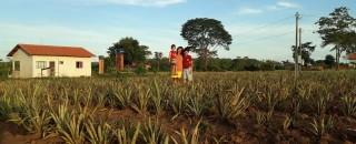 Viveiro Cidadão: Agricultoras iniciam plantio de 30 mil mudas em quintais produtivos em Rondônia