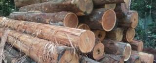 Equipe da Sedam apreende mais de 500 metros cúbicos de madeira extraída ilegalmente na Resex Rio...