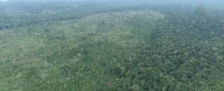 Floresta Amazônica pode virar cerrado devido a desmatamento, segundo pesquisa