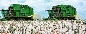 Após produção de soja e milho, vilhenenses apostam e realizam a primeira colheita de algodão em...