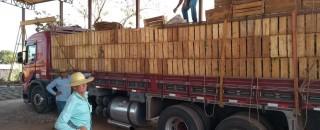 Rolim de Moura – Mais 18 mil mudas de Café Clonal são distribuídas para produtores rurais