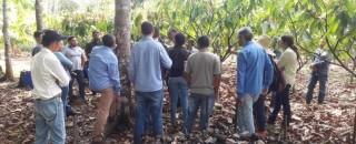 Semana do Cacau movimenta produtores do fruto em Ouro Preto do Oeste, RO