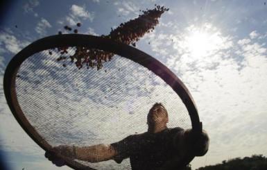Após período de baixa, exportações de café crescem 30% em agosto