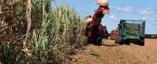 Produção agrícola aumenta área colhida em 2017, mas valor caiu 0,6%