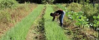Produtores rurais do Cone Sul recebem certificado de reconhecimento de ocupação de propriedades