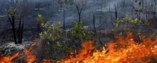 Rondônia registra mais de 100 focos de queimadas diariamente, diz INPE