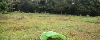 Tem lixão matando em Rondônia