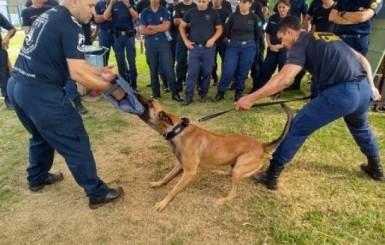Em cidade de São Paulo, policiais do 3º BPM de Vilhena participam de curso sobre trabalho com cães