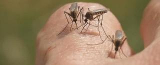 Mais de 7 mil casos de malária são registrados em 2018 em RO