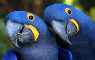 Ninhos artificiais e réplicas de aves serão usados para salvar espécies em extinção