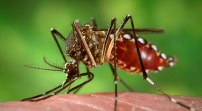 Agevisa confirma primeiro caso de zika vírus em Rondônia
