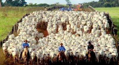 Governo publica lei baixando a pauta do boi e da vaca para venda a outros Estados